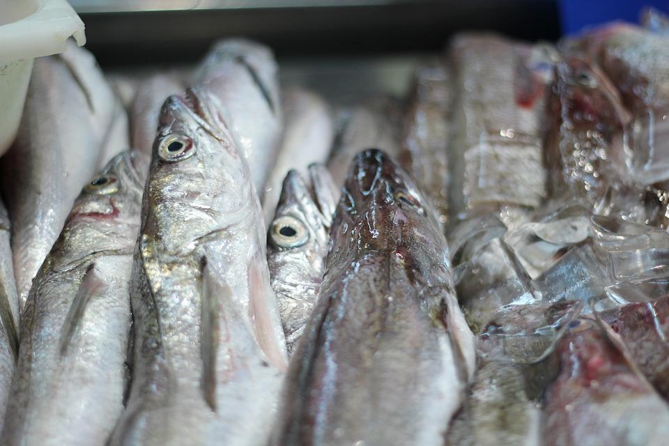 Глава Югры предложила поставлять в Чехию местную рыбу