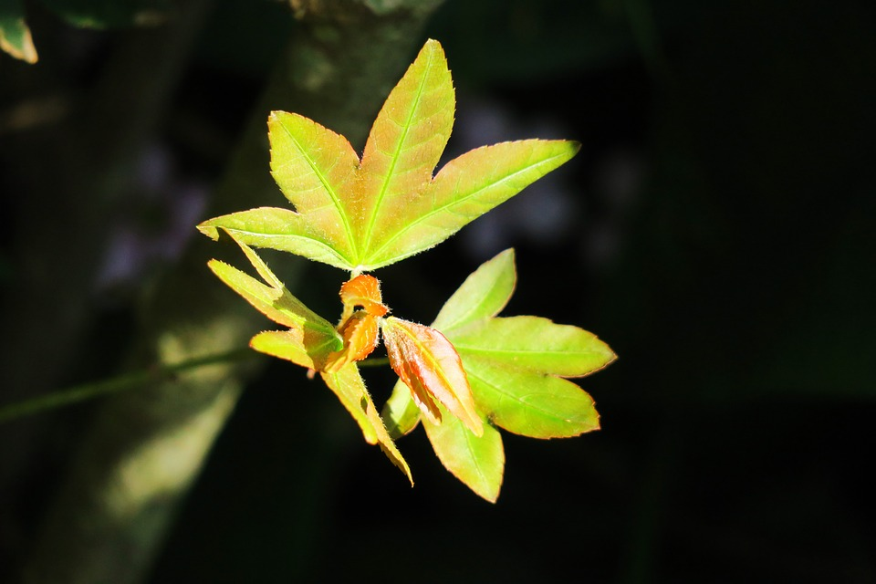 Hoja Naturaleza Planta Al Aire · Foto gratis en Pixabay