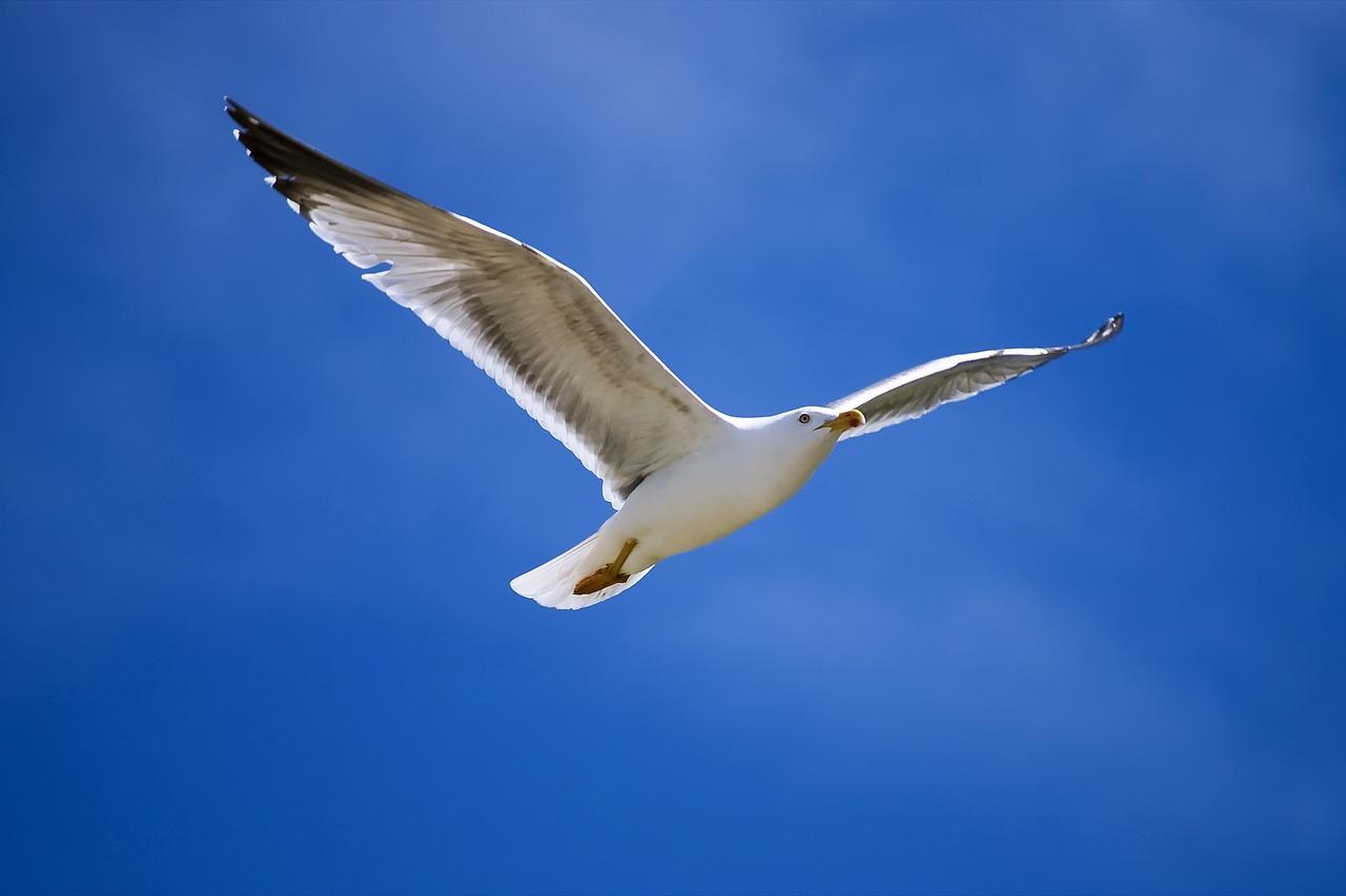 Картинка с чайкой и поздравления