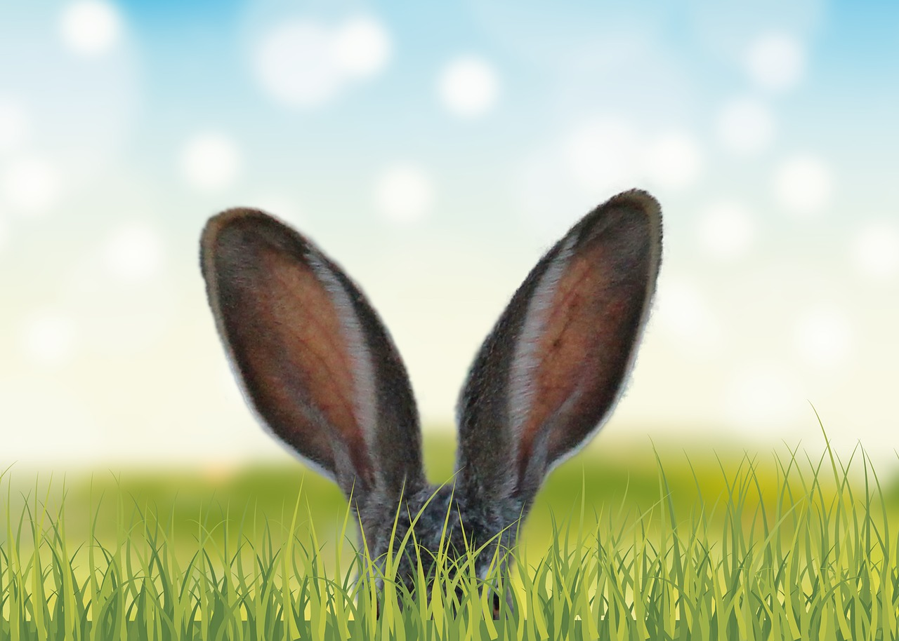 Grass, Nature, Field, Spring, Meadow, Hare, Ears