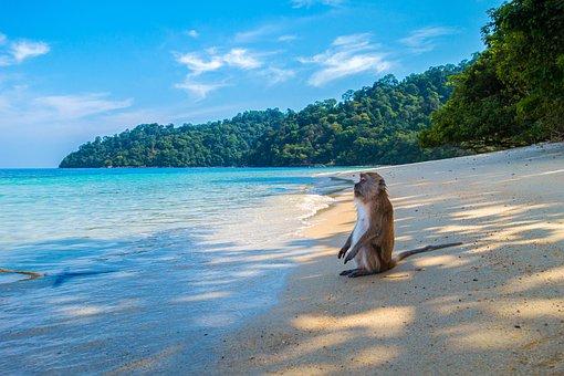 Affe, Affen, Affen Insel, Insel