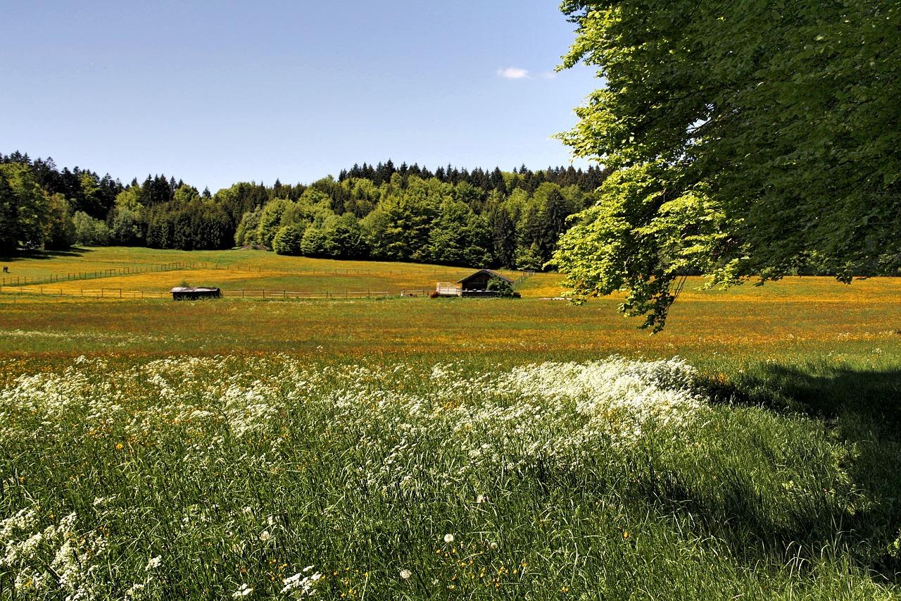 фото красивые пейзажи луга и поля члены королевской семьи