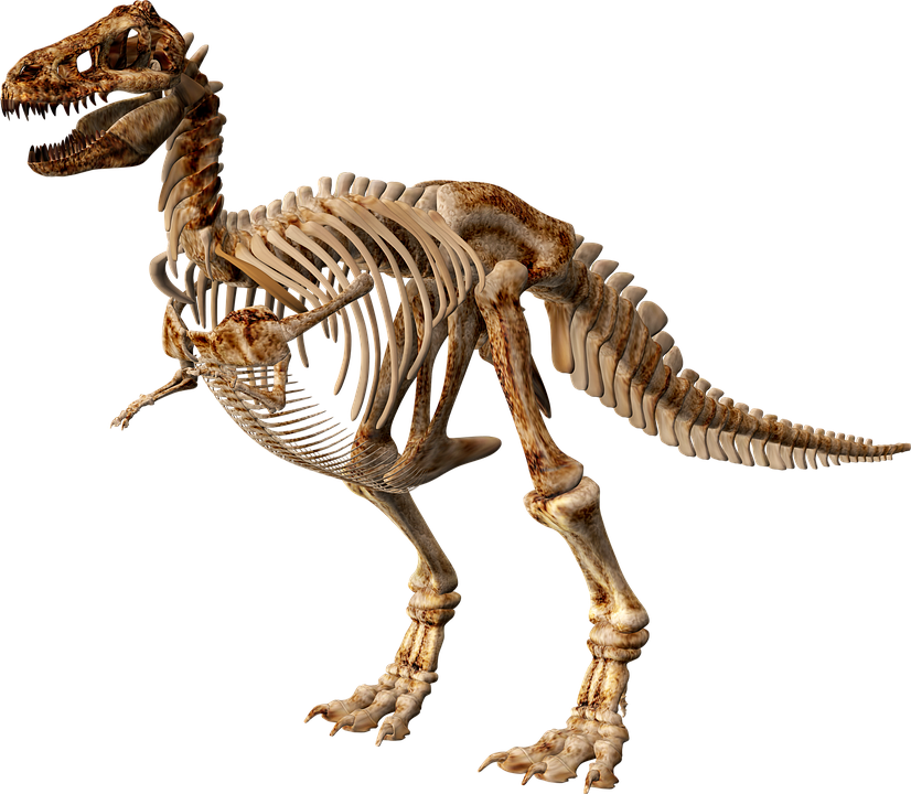 T Rex Dinosaur Skeleton - Free image on Pixabay