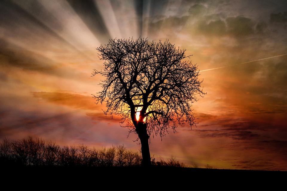 夜明け, サンセット, 木, 太陽, 風景, 自然, 空, 夕暮れ, Schönwetter, 夜