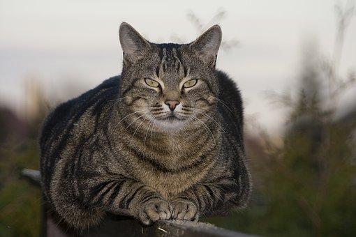 velká kočička zezadu ústní rána práce