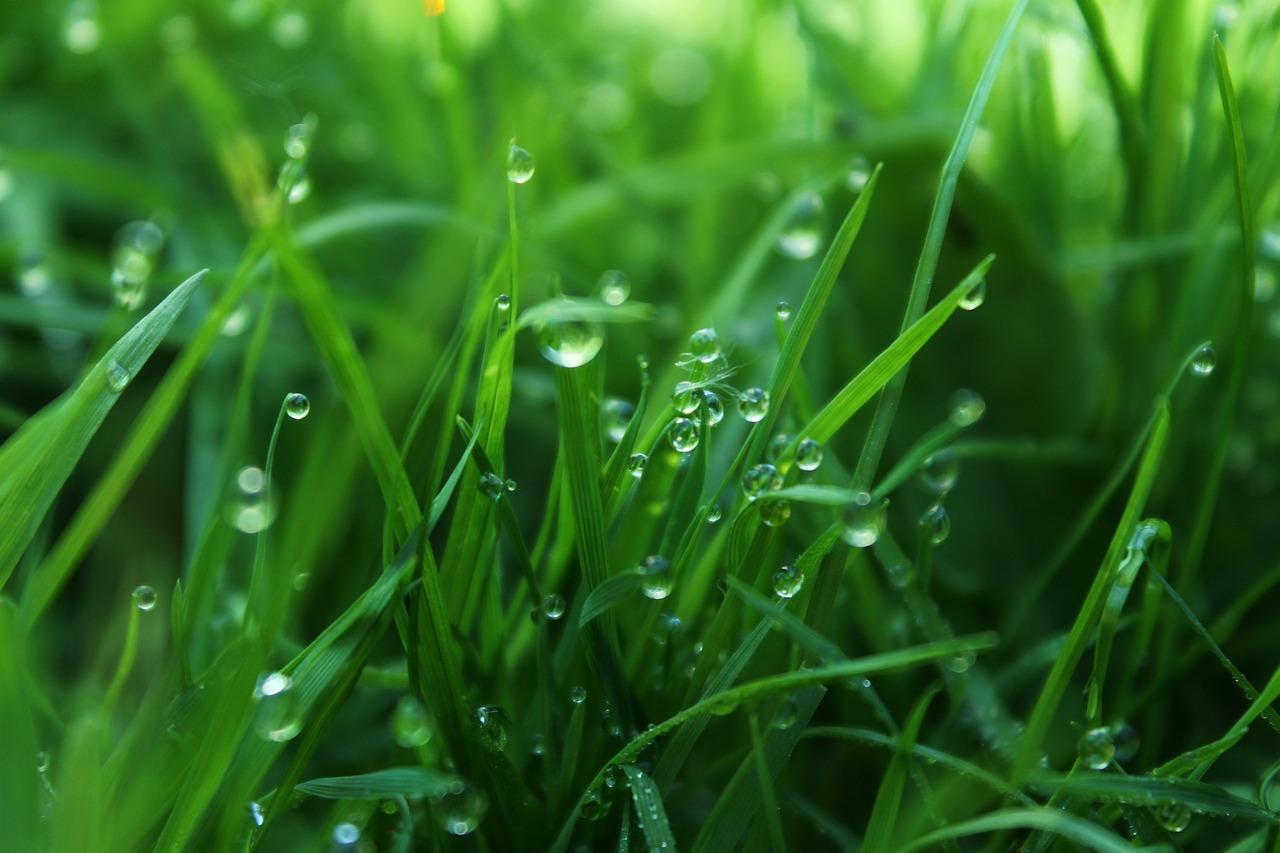Трава и листья картинка