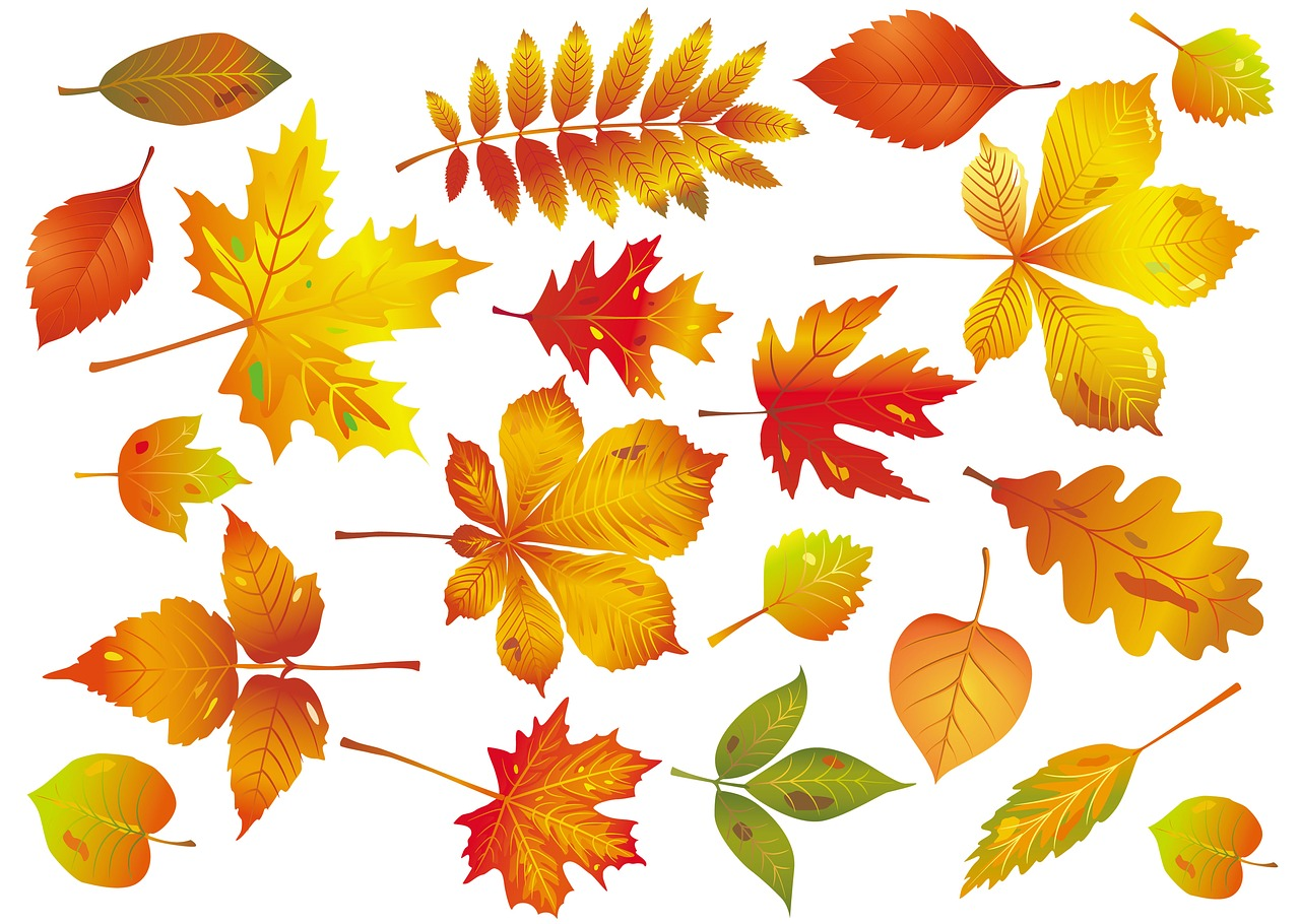 Картинки осенних листьев для вырезания цветные открытка двух