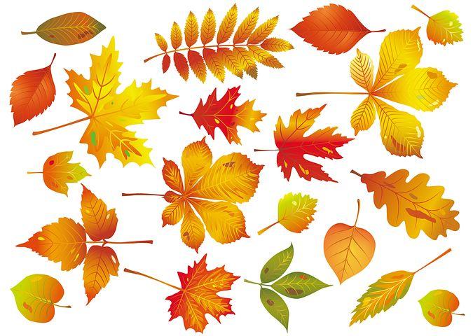 Открытка осень распечатать, дерево картинки для