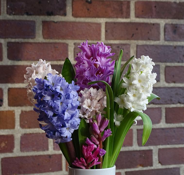 Bouquet Of Flowers Hyacinth Spring · Free photo on Pixabay