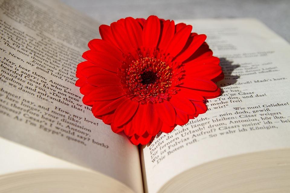 本, 開いた本, 読み取り, 花, ガーベラ, 赤, 学校, 教育, 研究, 世界文学