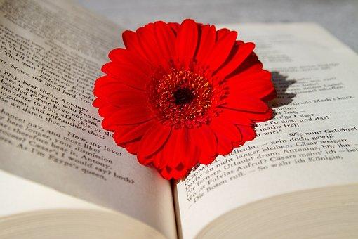 Book, Open Book, Read, Flower, Gerbera