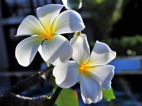 Flower, Nature, Plant, Petal, Garden