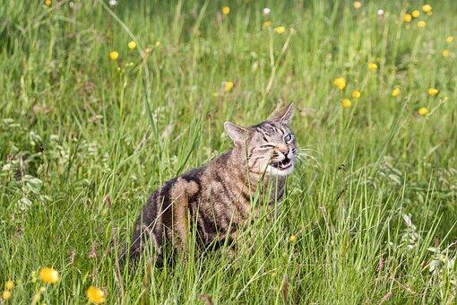 Kucing, Rumput, Makan, Alam