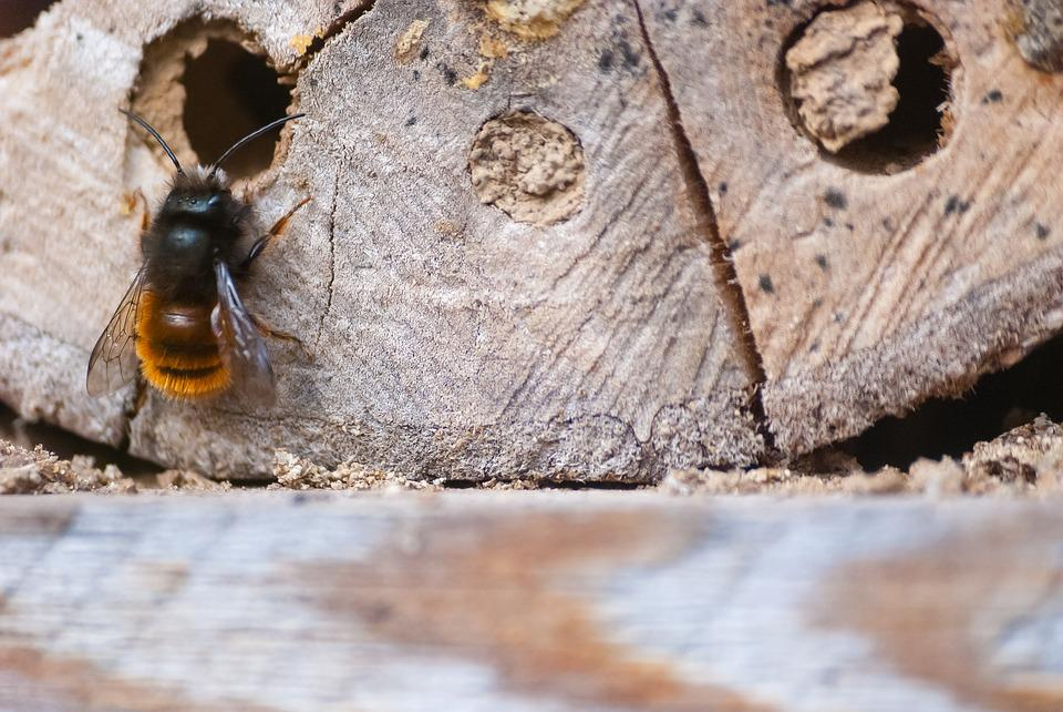 insectes bois maison avie home. Black Bedroom Furniture Sets. Home Design Ideas