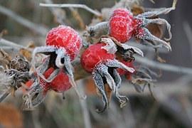 Ombrello non bagnato grafica vettoriale gratuita su pixabay for Ibisco in inverno