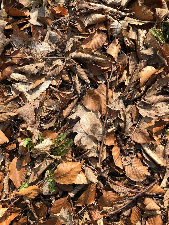 Leaf, Nature, Dry, Wood, Fall, Flora, Outdoors, Ground
