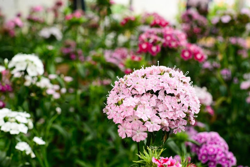 Mostra in fiore u cgiardini vigne orti e altri spettacoliu d eventi