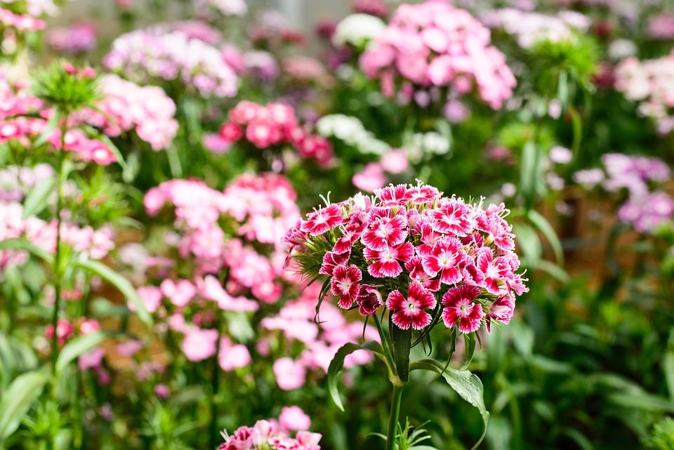 La primavera è in fiore viaggio nei giardini di firenze