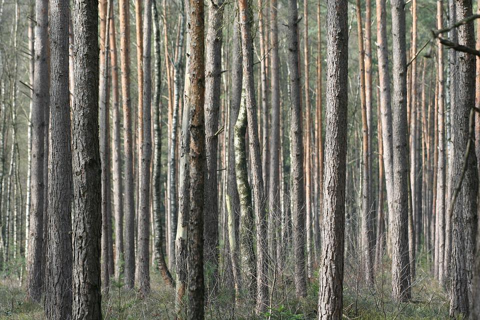 Bois nature arrière plan du bureau · photo gratuite sur pixabay