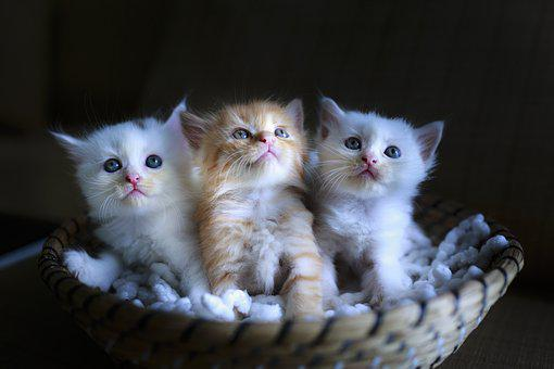 800 Free Cat Baby Cat Photos Pixabay