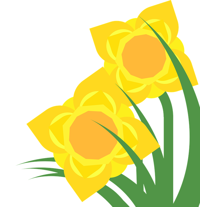clipart daffodil narcissus free image on pixabay rh pixabay com daffodil clip art free daffodil clip art border