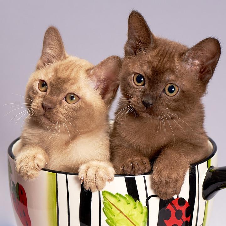 Gato, Gatinho, Bonito, Animal De Estimação, Animais