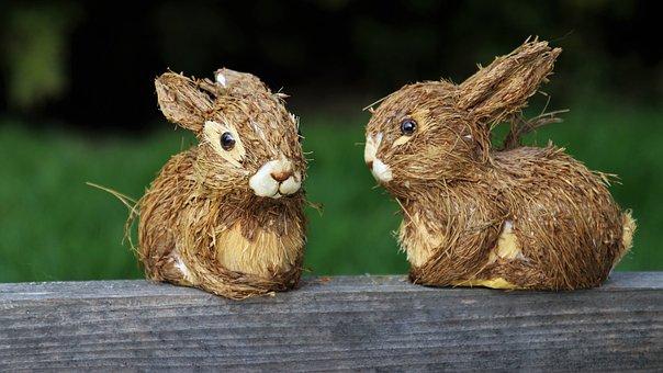 Kaninchen, Natur, Tiere, Charmante