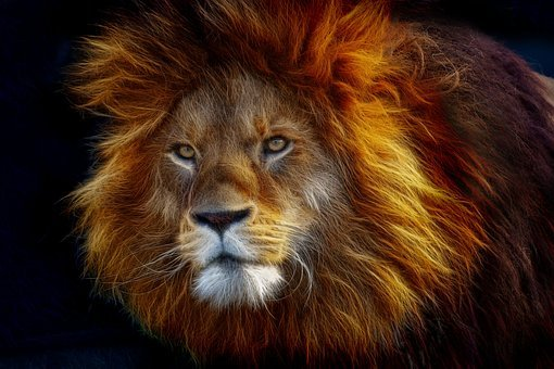 Big cat images pixabay download free pictures - Photo de lion a imprimer en couleur ...