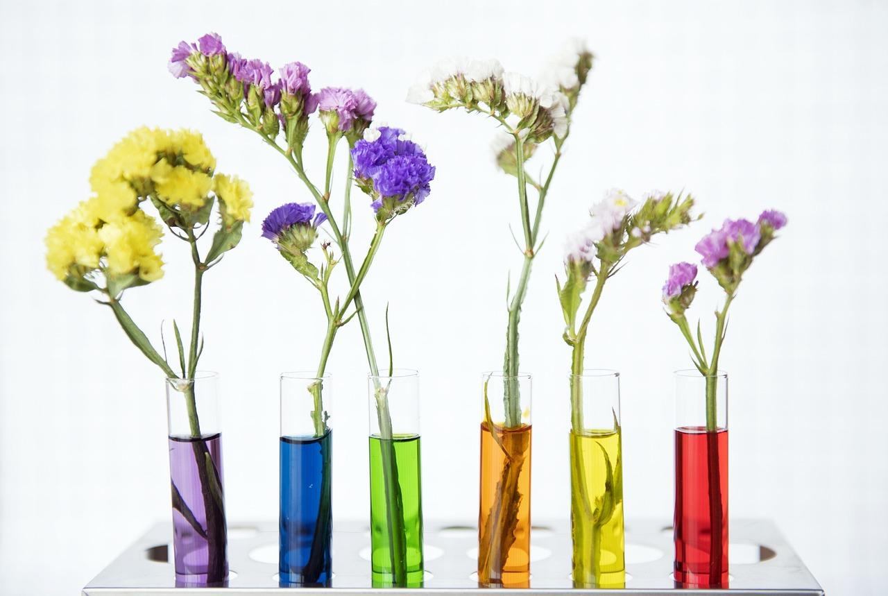スターチスの花言葉3つ・色別3種|別名・開花時期