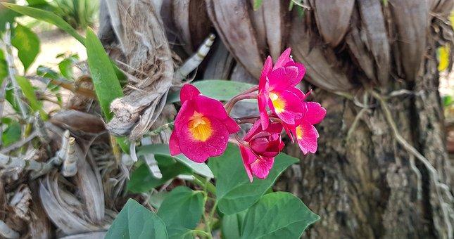 Kuba-Reise: 1. Etappe Valle de Viñales - Orchideengarten Soroa