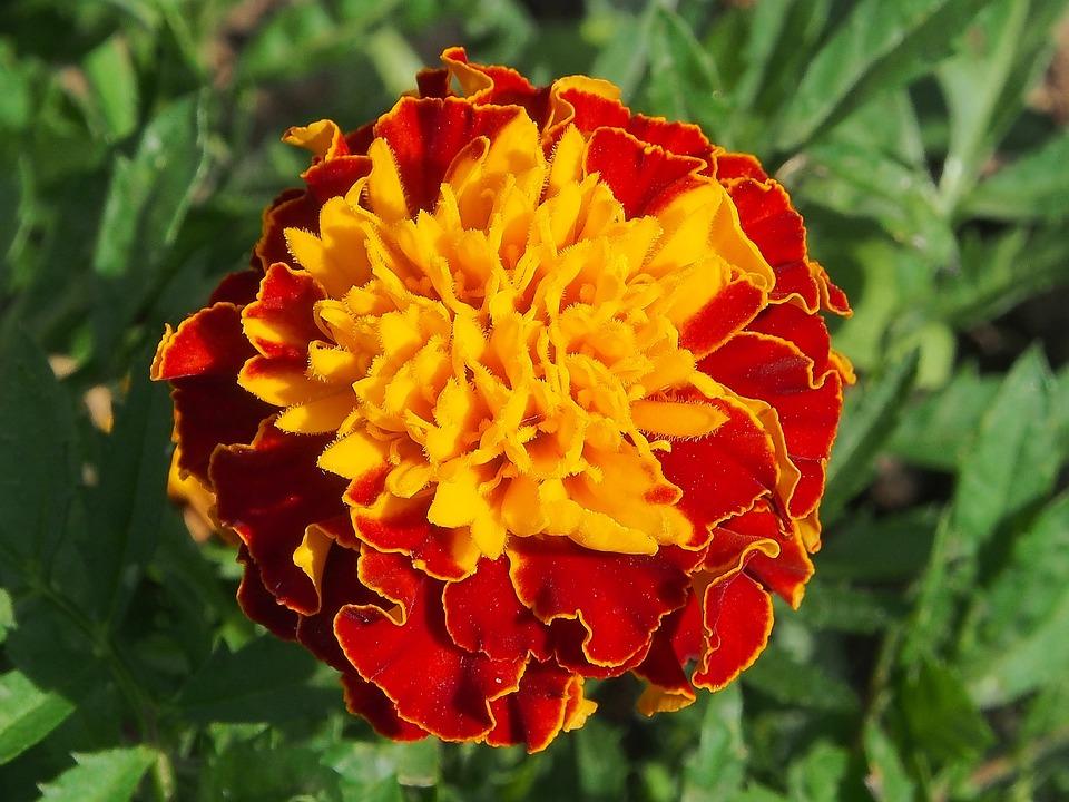 Fiori Gialli Arancio.Fiore Giallo Arancio Estate Foto Gratis Su Pixabay