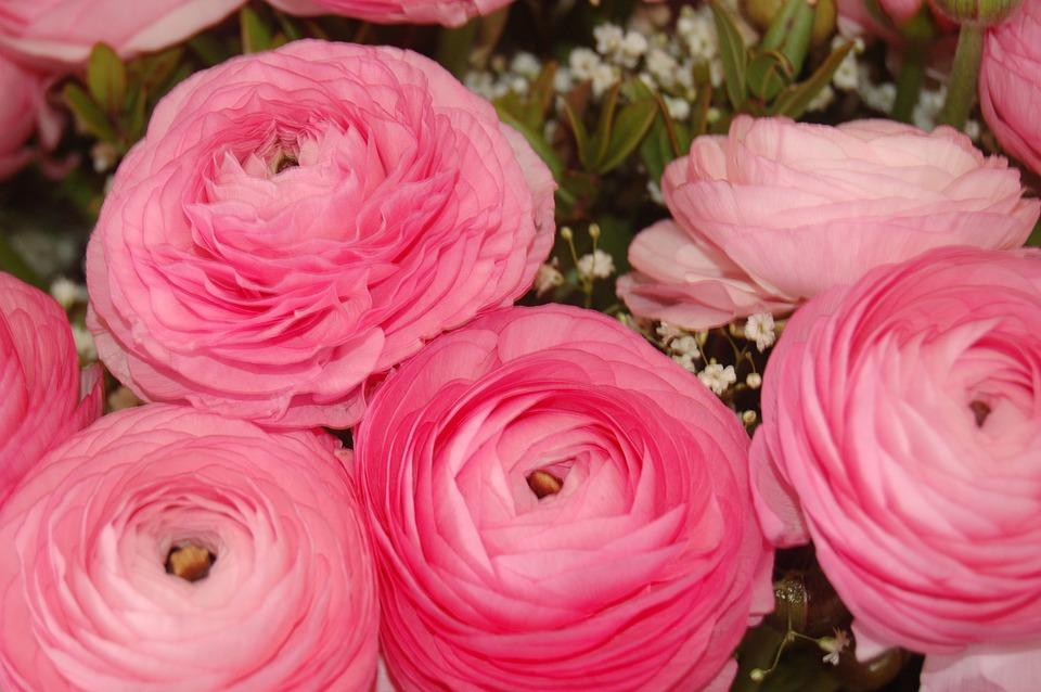Flower petal bouquet de fleurs free photo on pixabay flower petal bouquet de fleurs bloom altavistaventures Choice Image