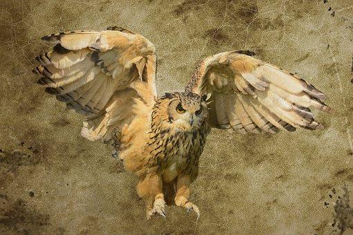 Unduh 820+  Gambar Burung Hantu Background Hitam HD Paling Bagus Free