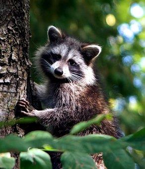 Wildlife, Mammal, Animal, Nature, Cute