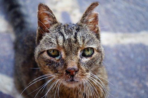 Katze, Verletzte Katze, Katze Krank