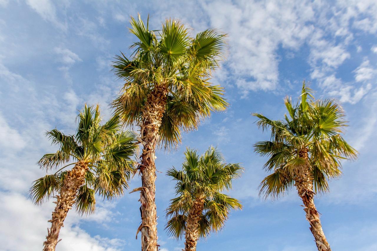 длинные картинки пальмы шоколадного дня