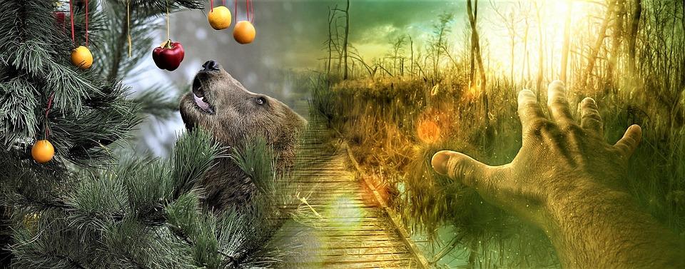foto de Nature Animal Kingdom Couleur Fond - Photo gratuite sur Pixabay