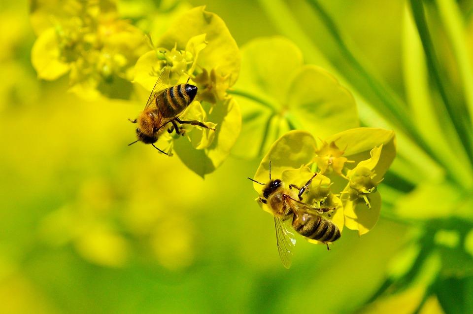 蜂蜜,开花,蜂箱,养蜂业,苍蝇,动物,吸引,蜂蜜v蜂蜜,飞,蜜蜂头顶特别养蜂昆虫图片