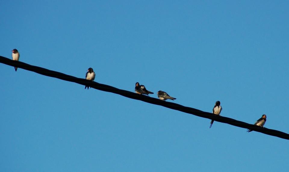 Die Kuppel Des Himmels Vögel · Kostenloses Foto auf Pixabay