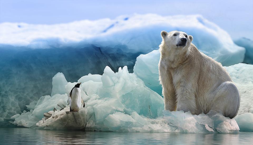 Oso Polar Pingüino Ártico La - Foto gratis en Pixabay
