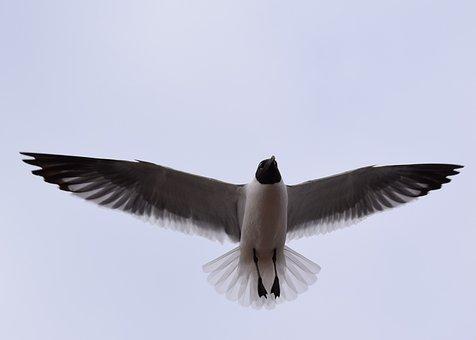 Γίγαντας λευκό πουλί