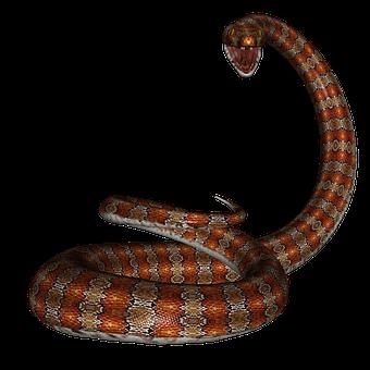300+ Free Snake & Reptile Illustrations - Pixabay