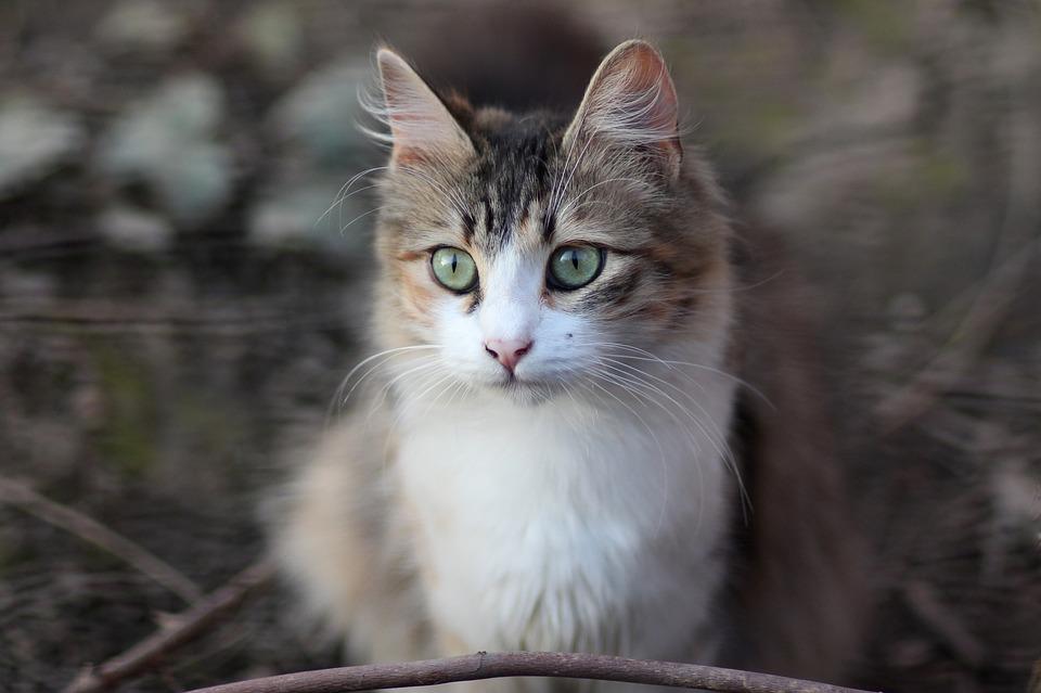 Pisica Felina Colorat Fotografie Gratuită Pe Pixabay