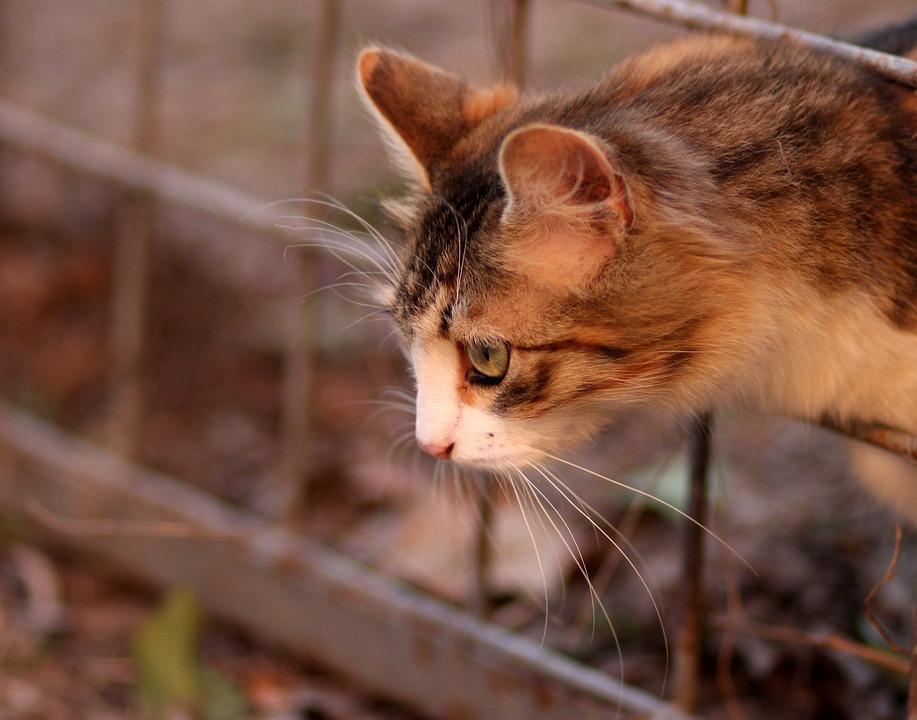 Katze Färbung Haustier · Kostenloses Foto auf Pixabay