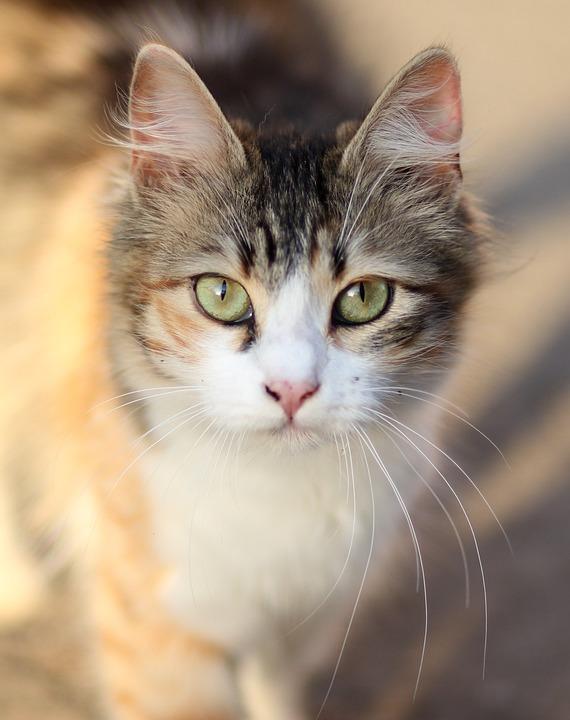 Kot Kolorowanki Zwierzę Darmowe Zdjęcie Na Pixabay
