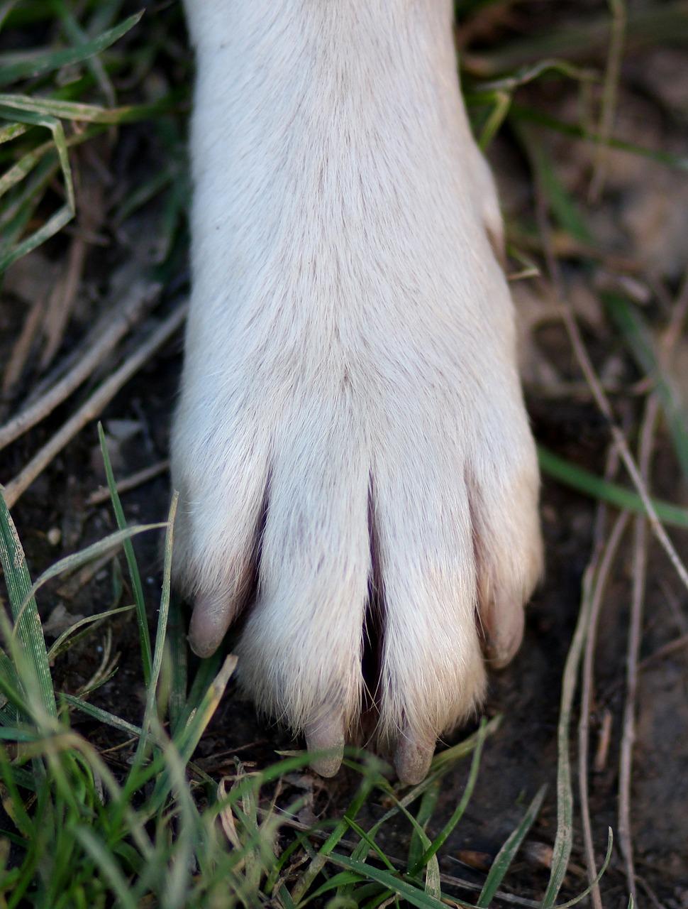 фото лапки собаки цитрусовые пополам