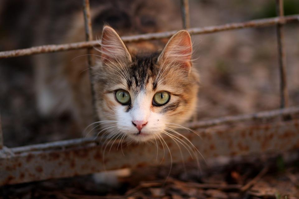 Chat Coloriage Animal De Compagnie Photo Gratuite Sur Pixabay