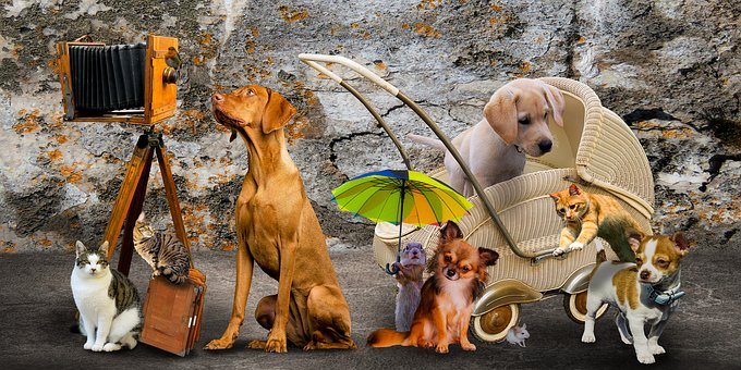 Clínica Veterinaria en Cajicá Nacer, Animales, Perros, Gatos, Cuidados