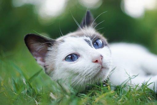 Cute, Animal, Nature, Little, Mammal
