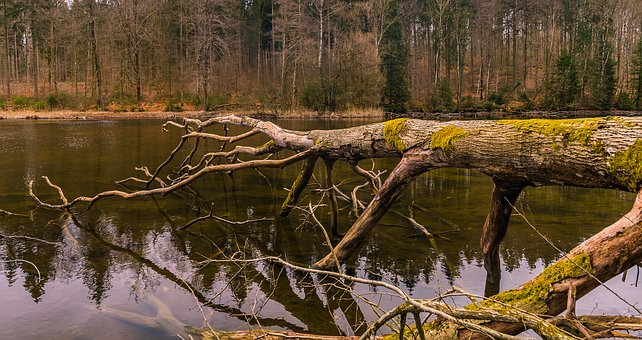 Nature, Wood, Tree, Waters, Landscape